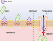Risico op rabdomyoloyse bij combinatie colchicine en statine
