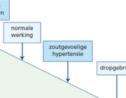 Hypertensie en hypokaliëmie door glycyrrhizine-gemedieerd pseudohyperaldosteronisme