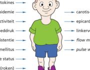 Obesitas op de kinderleeftijd: voorspellende vaten?